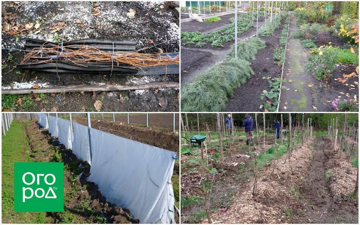 Как укрывать виноград на зиму, при какой температуре, особенности в подмосковье, средней полосе россии, в украине и других регионах