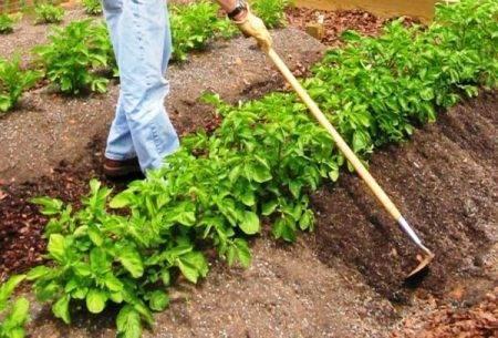 Суть метода самостоятельной посадки картофеля по методу митлайдера