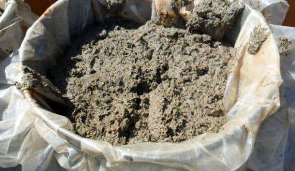 Как использовать голубиный помет для удобрения почвы