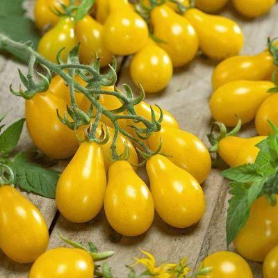 Сладкий томат медовая капля: описание сорта