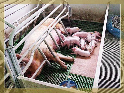 Кормушки для свиней (32 фото): как сделать корыто для поросят своими руками по чертежам? описание автоматических и других кормушек