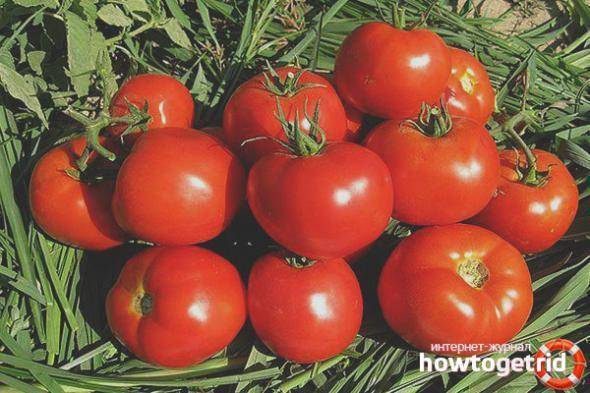 Томат лоджейн f1 описание фото отзывы - журнал садовода ryazanameli.ru