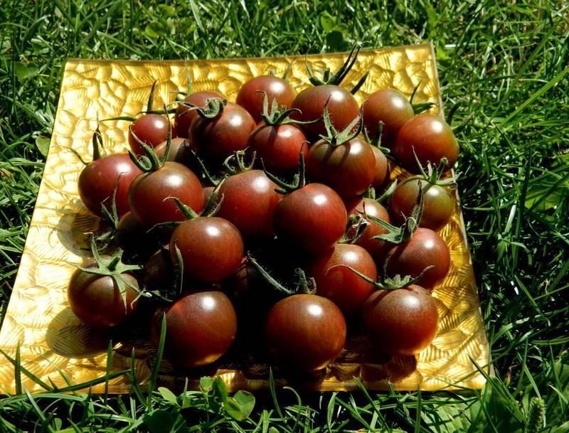 Отечественный сорт томата «черный крым» или «черный крымский»: описание, характеристика, посев на рассаду, подкормка, урожайность, фото, видео и самые распространенные болезни томатов