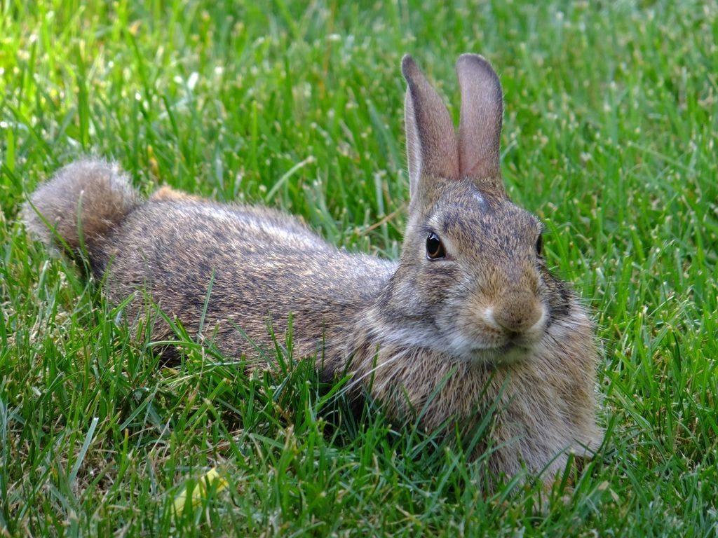 Разведение кроликов в домашних условиях для начинающих: рекомендации, особенности, подходы