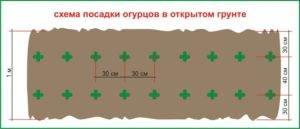 10 важных правил выращивания огурцов в открытом грунте. сроки посева, уход. фото — ботаничка.ru