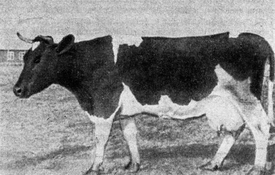 Кормление коров: виды кормов, составление рациона питания крс