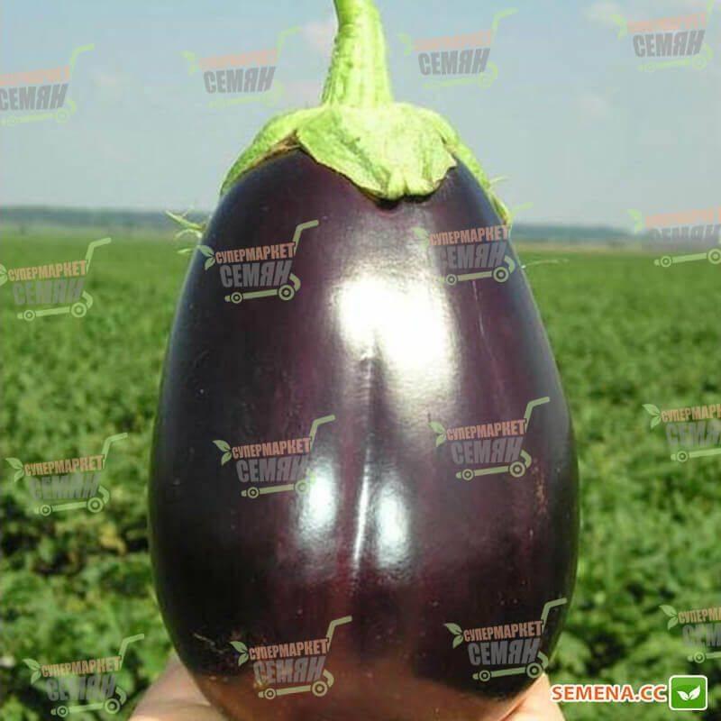 Баклажан валентина f1: описание сорта, особенности выращивания, фото, отзывы