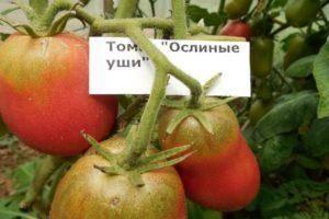 Капия розовая: описание сорта томатов, отзывы