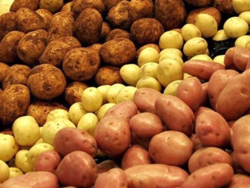 ᐉ сорта картофеля для урала (уральский регион): список - roza-zanoza.ru