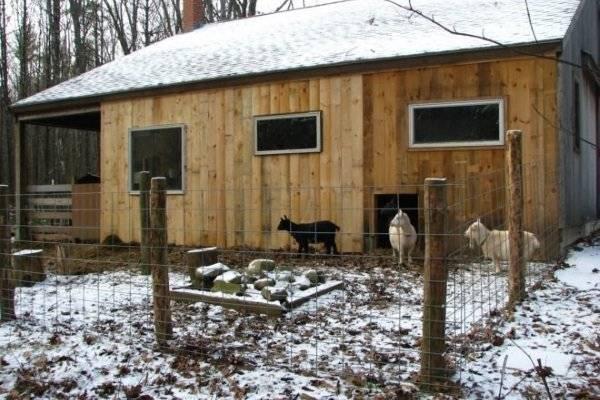 Сарай для коз своими руками: строительство и обустройство