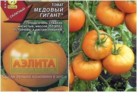 Томат медовый гигант: характеристика и описание крупноплодного сорта с фото