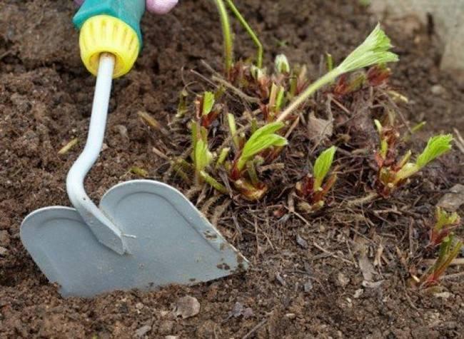 Чем удобрять клубнику осенью для улучшения урожая на следующий год