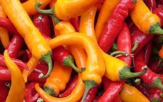 Описание перца сорта «Геркулес»: достоинства и недостатки