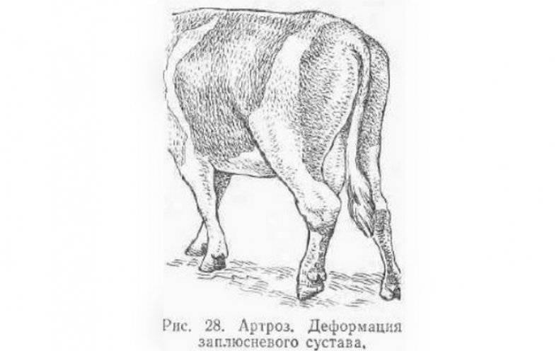 Витамины корове после отела: нужны ли они и в каких количествах