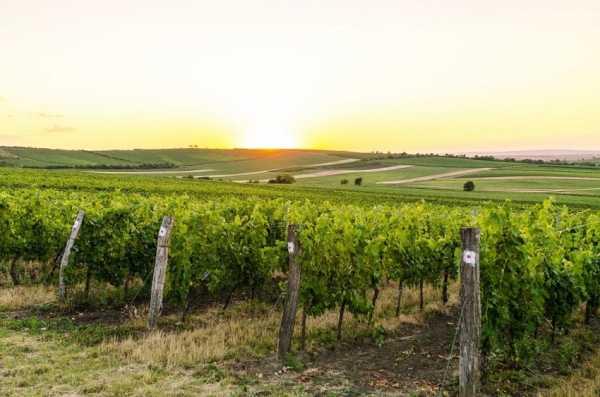 Шпалера для винограда своими руками: чертежи и фото, виды