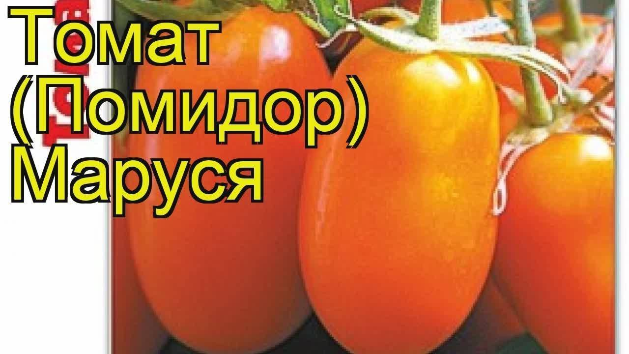 Маруся: описание сорта томата, характеристики помидоров, посев