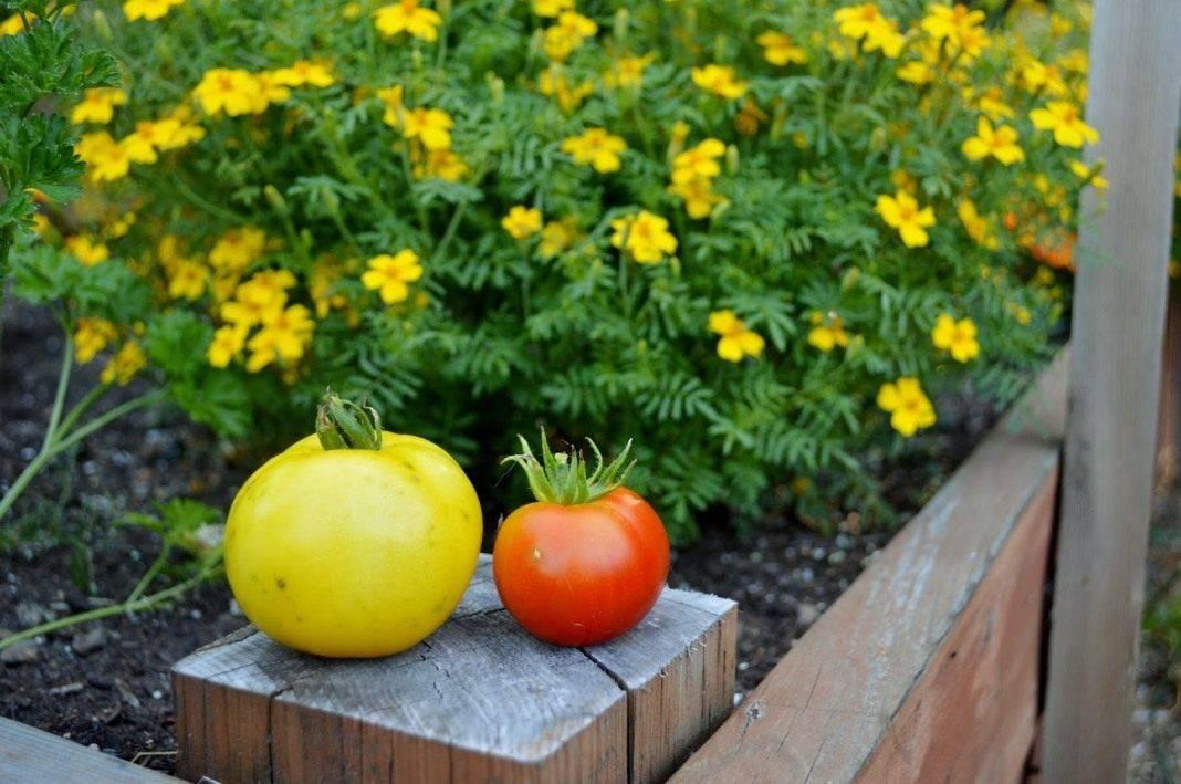 Системные инсектициды для сада: описание препаратов для защиты