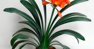 Комнатные цветы для дома с фото и названиями