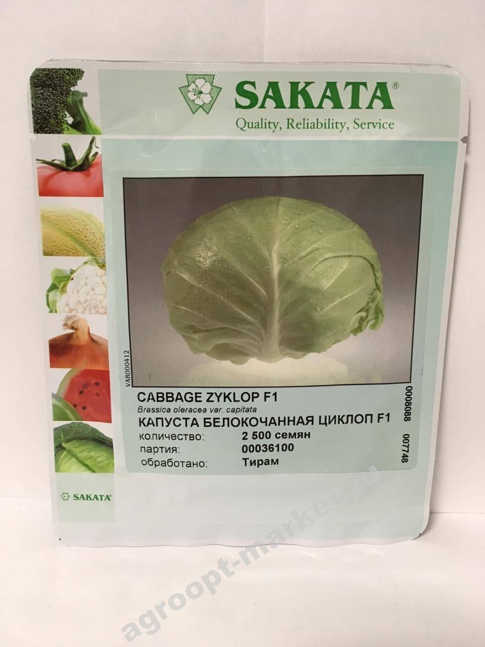 Семена капуста б/к f1 циклоп для квашения: описание сорта, фото