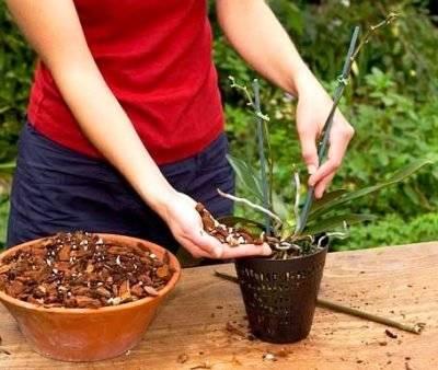 Как приготовить кору для орхидей своими руками