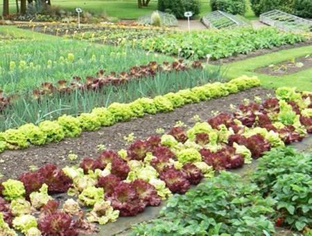 С чем рядом можно посадить кабачок, чтоб урожай был по-прежнему высок?