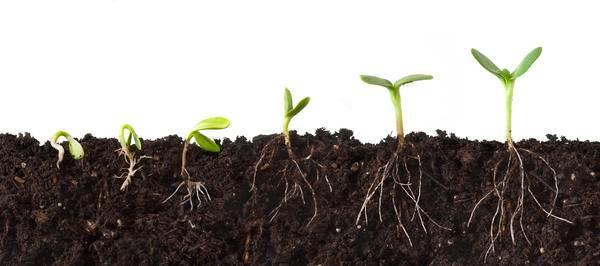 Какие стимуляторы роста лучше использовать для рассады