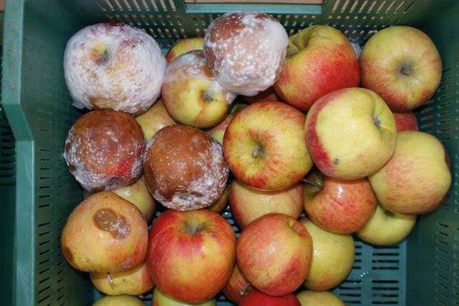 Как хранить яблоки на зиму: правильная подготовка в домашних условиях
