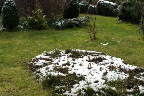 Посадка газона весной своими руками: когда и как сеять