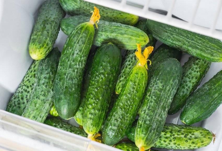 Семена огурец марьина роща f1: описание сорта, фото. купить с доставкой или почтой россии.