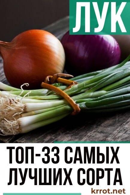 Лучшие сорта лука для подмосковья открытый грунт / выращивание луковиц и пера в московском регионе