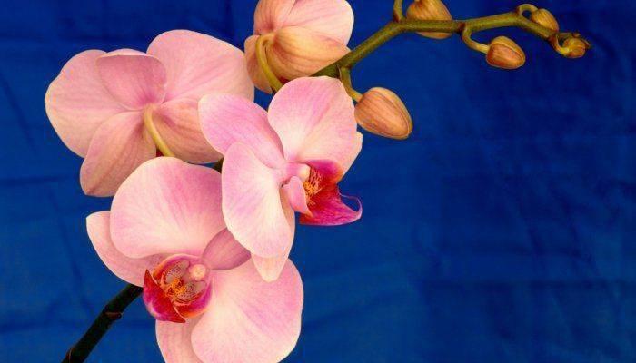 Нужно ли поливать орхидею, как правильно увлажнять цветок? способы орошения и инструкция по процедуре