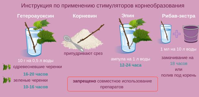 Размножение смородины осенними черенками. правильное черенкование смородины. способы, фото — ботаничка.ru