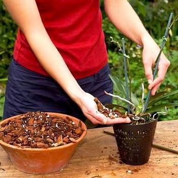 Как пересадить цветы из одного горшка в другой: правила и рекомендации