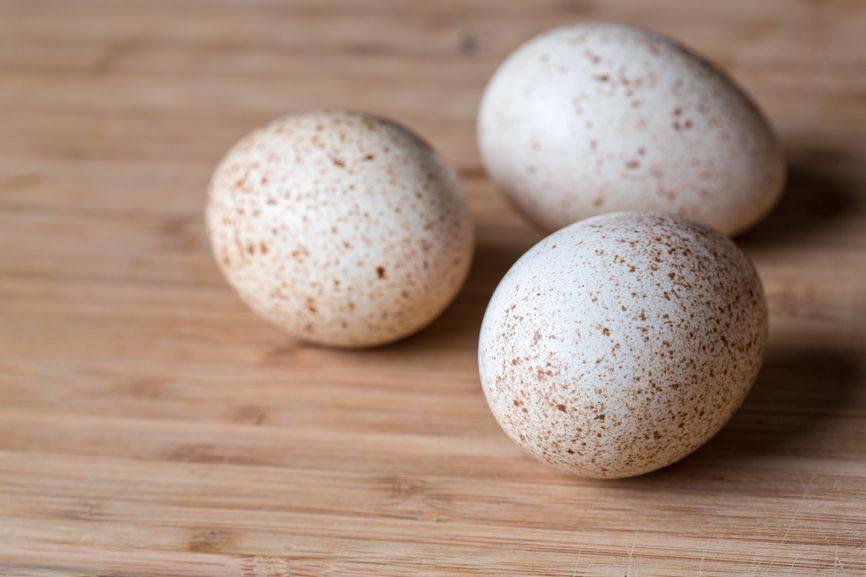 Яйца индоутки: польза и вред, описание, свойства