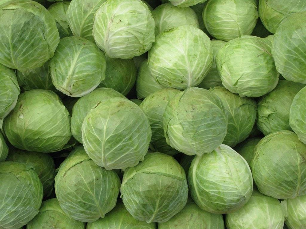 При какой температуре хранить капусту (свежую) зимой, как можно и нужно организовать условия хранения урожая?
