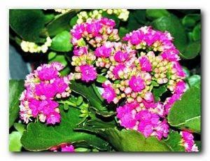 Комнатные цветы, которые должны быть в каждом доме
