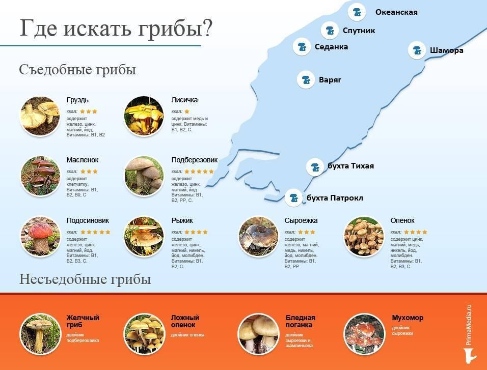 Грибы псковской области 2021: когда и где собирать, сезоны и грибные места