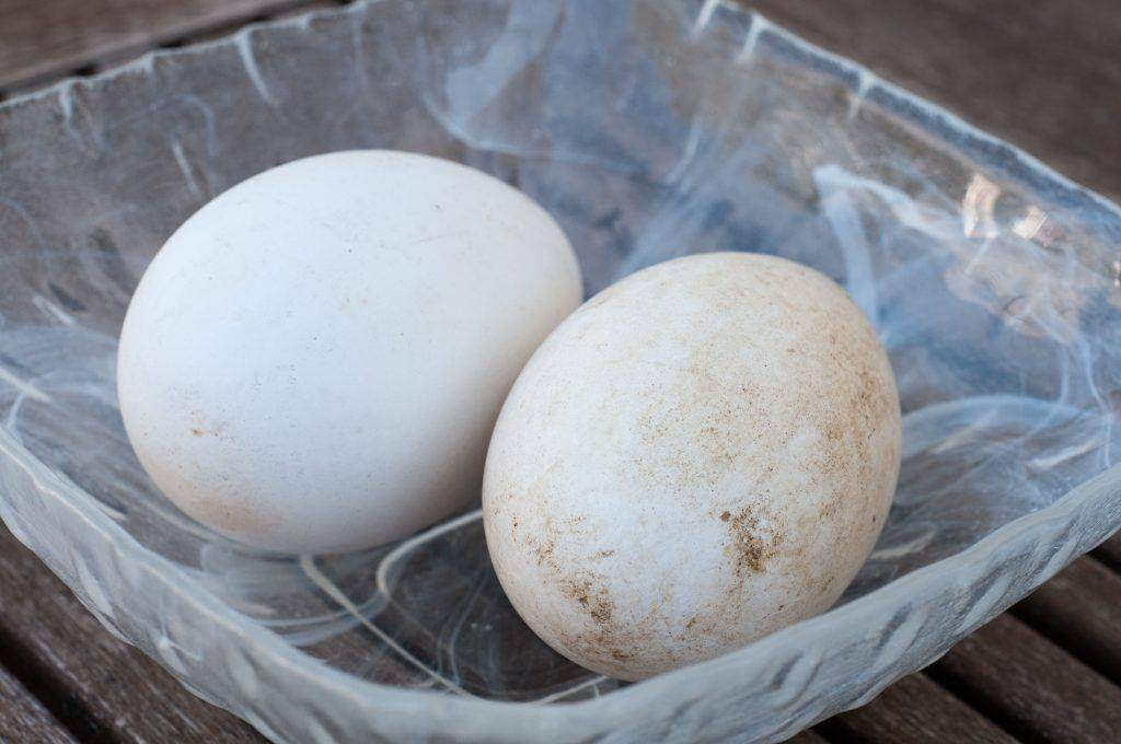 Гусиные яйца: польза и вред, чем они отличаются от куриных, сколько их варить и можно ли их есть?