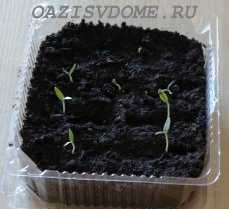 Особенности посева баклажанов на рассаду по лунному календарю: благоприятные и запрещенные дни для посадки, как подготовить семена