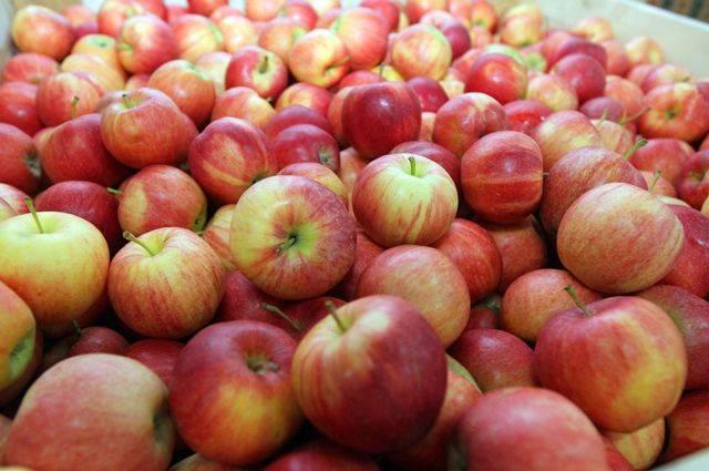 Яблочный вопрос