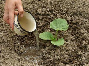 Время сажать тыкву, подготавливаем семена к посадке