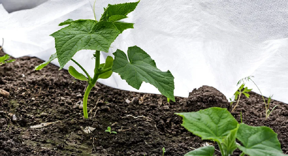 Агроткань: применение в садоводстве отличие от агроволокна