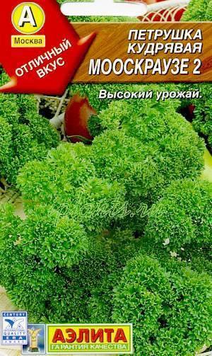 Простое руководство по выращиванию петрушки в квартире: от посадки до сбора урожая пошагово