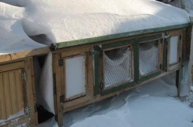 Как правильно содержать кроликов зимой на улице