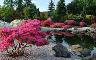 Кустарники для дачи: 150 фото декоративных кустов и советы по их размещению