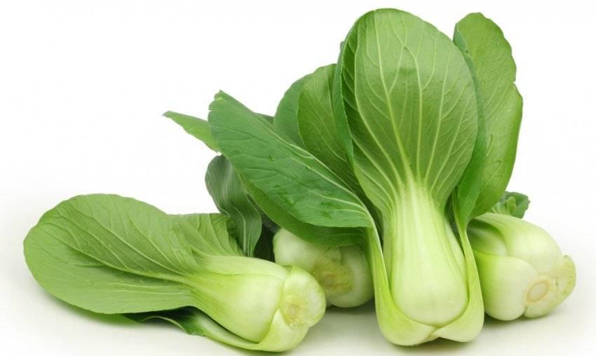 Бок чой- китайская листовая капуста