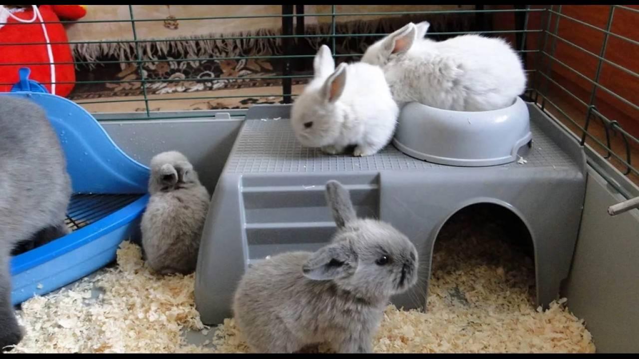 Сколько лет живет кролик в домашних условиях