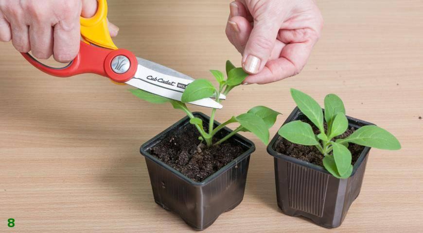 Выбор земли для посадки петунии в кашпо