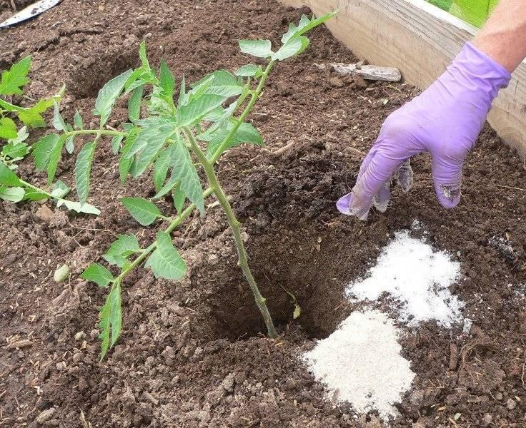 Суперфосфат для рассады помидор - моё село