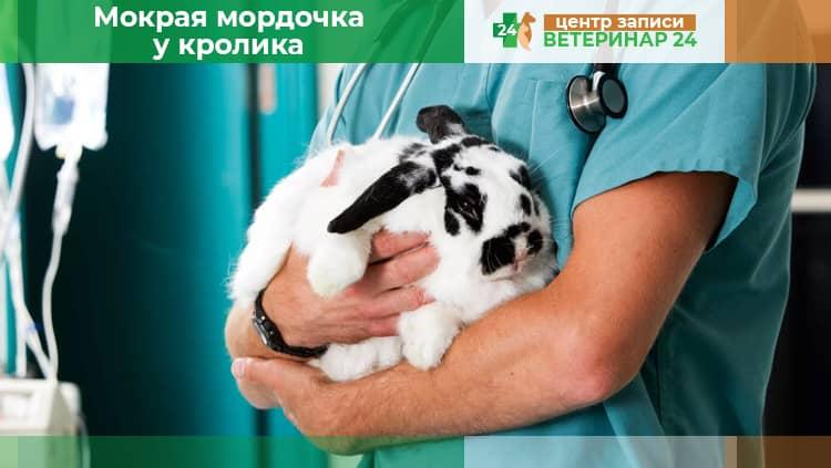 Стоматит (мокрая мордочка) у кроликов: как и чем лечить